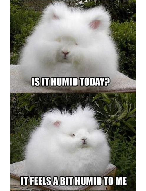 Humidity Vs Hair One Fat Frog