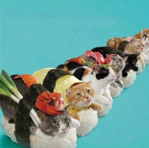 Cat Sushi Cat Sushi One Fat Frog