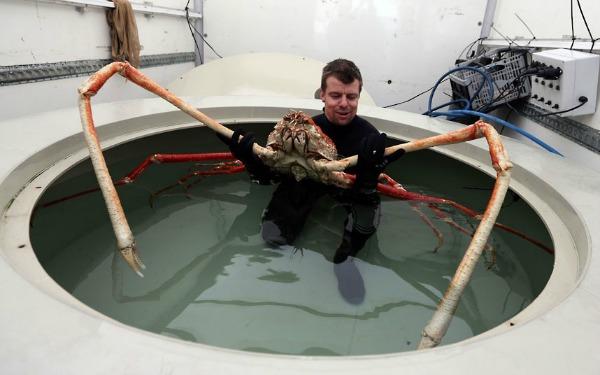 huge-crab